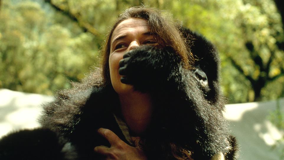 Gorilla nella nebbia: la vera storia S1
