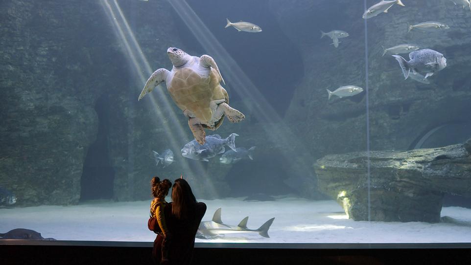 Aquarium: An Aquatic Life S1